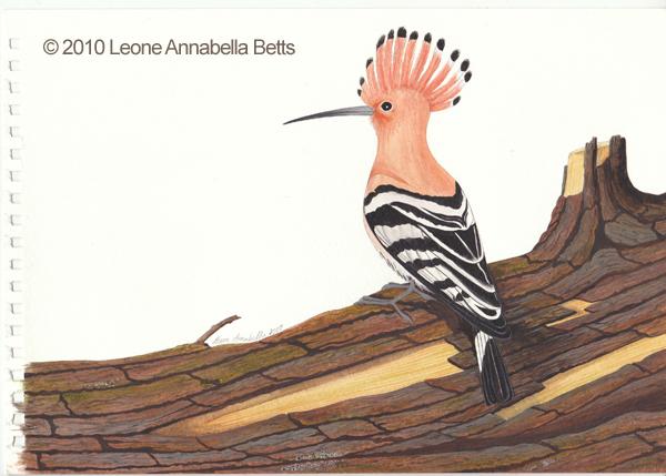 """Hoopoe"" by Leone Annabella Betts"