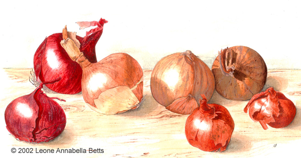"""Just Onions"" - a still life painting by Leone Annabella Betts"