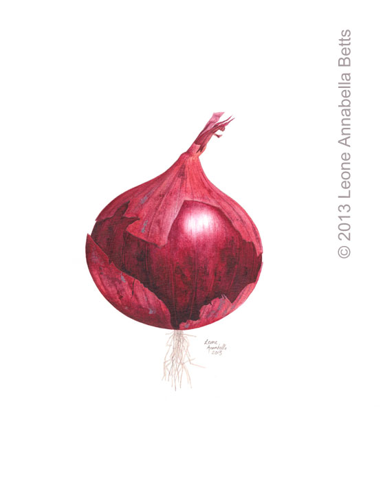 Botanical painting of a red onion by Leone Annabella Betts