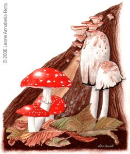 Botanical painting of fly agaric and ink cap toadstools