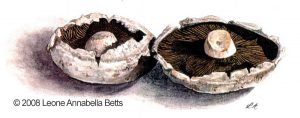 Field Mushrooms - by Leone Annabella Betts